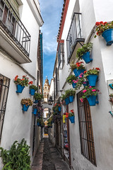 Calleja de las Flores (MichellePhotos2) Tags: callejadelasflores calleja flores spain cordoba flowers flora posts sony street narrow passageway arch stone color flowerpots geranium carnations mezquita cathedral balcony alley jewishquarter rx100 andalusia