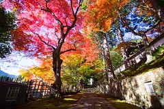 Colored-leaves (walkkyoto) Tags: 紅葉 亀岡市 kameoka 苗秀寺 myosyuji 寺 temple 京都 kyoto 日本 japan laowa75mmf20