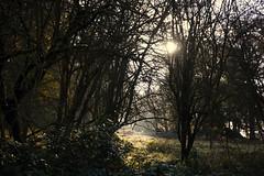 Photo of Windsor Great Park 17 November 2019 005