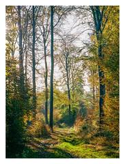 Autumn forest, Kell am See (Germany) (werner-marx) Tags: analog film meinfilmlab mediumformat agfarecordiii apotar kodakportra400 kellamsee forest autumnforest autumn