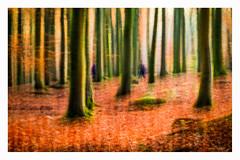 Morning Walk (1 of 1) (ianmiddleton1) Tags: walk people icm movement compoaite autumn fall