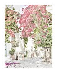 2539hb  Autumn in Halki (1) (foxxyg2) Tags: bougainvillea pink flowers flora bracts trees hk highkey art autumn season halki naxos cyclades greece greekislands islandhopping islandlife tables alfresco chairs restaurant