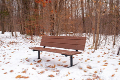 Earl Bales Park, Toronto, Ontario, Canada (Tiphaine Rolland) Tags: winter hiver 2019 earlbalespark park parc toronto ontario canada snow neige cold froid nature forest forêt trees arbres bois wood leaf feuille banc bench white blanc