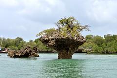 Fumba (Enrica F) Tags: fumba zanzíbar tanzania áfrica nikon manglar water sea