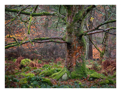 In amongst the autumn clutter (fishyfish_arcade) Tags: gx7 landscape lumix padleygorge peakdistrict tree autumn fall
