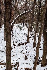 Earl Bales Park, Toronto, Ontario, Canada (Tiphaine Rolland) Tags: winter hiver 2019 earlbalespark park parc toronto ontario canada snow neige cold froid nature forest forêt trees arbres bois wood white blanc