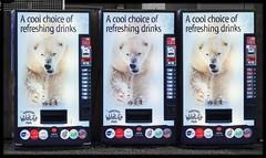 Drinks machines at Yorkshire Wildlife Park (ec1jack) Tags: yorkshirewildlifepark yorkshire wildlife park doncaster england britain uk europe animal zoo november ec1jack kierankelly outings tourist attraction polarbear drinksmachine cocacola