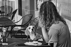 Not sharing? (charhedman) Tags: lonsdalequay northvancouver itsnotagirlitsaguy dog eating chairs outside hungry blackandwhite storytelling sowhatsallthisaboutmansbestfriend selfishb okalanthatsitwereover