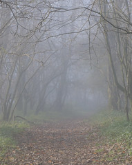 A Moody Woodland Walk (M.T.A.V) Tags: westsussex wood woodland wooded woodlandwalk mist misty fog foggy moody mood hartingdown south southdownsnationalpark southdowns path walk morningwalk autumn autumnal forest trees calm canon750d canoneos750d efs1855mm england englishcountryside