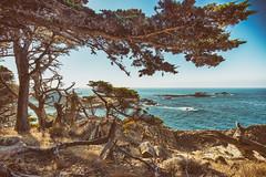 Headland Cove, Point Lobos, Carmel, California (amy buxton) Tags: california fall water landscape pacificocean pointlobos environments headlandcove ocean monterey amybuxton