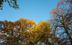 iPhone 11 camera RAW test 6 (neonblack) Tags: 2019 apple iphone 11 iphone11 raw germany deutschland bonn herbst fall autumn leaves trees november 2019年 ドイツ 11月 秋 黄葉 herbstlaub testfotos testshots ボン