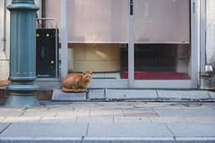 猫 (fumi*23) Tags: ilce7rm3 sel85f18 85mm emount fe85mmf18 a7r3 feline animal alley street katze gato cat chat neko ねこ 猫 ソニー