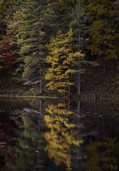 Birch Reflection, Cranberry Pond (2770) ((8_8)) Tags: autumninnewengland autumn beauty cranberrypond sonya7ii sonyfe70200mmf28gmoss reflection reflectionphotography sunderland fall foliage massachusetts newengland water tranquil landscape landscapephotography