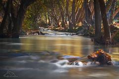 Rio-Dilar (puma3023) Tags: rio dilar granada otoño agua dorado hojas corriente arboles bosque digitalcameraclub