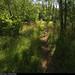20190726_14 Brown trail next to field | Kinnekulleleden, Västergötland, Sweden