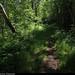 20190726_13 Brown trail through lush forest | Kinnekulleleden, Västergötland, Sweden