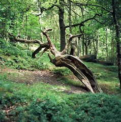 (Chris Hester) Tags: 73 6p2 trees forest wood green
