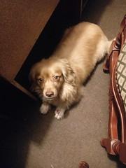 Roni (Santiago Stucchi Portocarrero) Tags: perro can cane dog hound hund chien roni santiagostucchiportocarrero