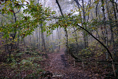 Log stairway (PhrozenTime/WAHLBRINKPhoto) Tags: geography europe french france brittany illeetvillaine poligné tertregris weather foggy fog timeofyear autumn fall timeofday morning biology plant tree deciduous betulapendula bouleauverruqueuxoubouleaublanc sweetchestnut illeetvilaine35