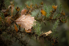 Fallen (tonguedevil) Tags: outdoor outside countryside autumn nature woodland forest trees leaves leaf rain raindrops colour light shadows bokeh