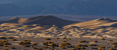 Death Valley Winter Light 2018 (1) (Jeff Sullivan (www.JeffSullivanPhotography.com)) Tags: winter light sand dunes death valley workshop national park sunrise mesquite flat deathvalley nationalpark stovepipe wells california usa landscape photography canon eos 5d mark iv road trip jeff sullivan allrightsreserved photo copyright december 2018 panorama deathvalleynationalparksunrisemesquiteflatsanddunesdeadeath