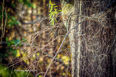 Early Sun (Photographybyjw) Tags: early sun other side tree bright morning sunlight high lights bare branches this shot north carolina ©photographybyjw foliage bark rural country