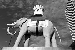 Elephant & Castle / Statue (Images George Rex) Tags: sculpture publicart london southwark uk elephantcastle elephantandcastle bw monochrome blackandwhite england unitedkingdom britain imagesgeorgerex photobygeorgerex igr 3afcdd52a876e3a11fb22d2b1b205af2