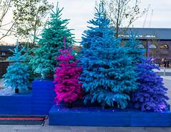 Multicoloured christmas trees (tommyajohansson) Tags: london kingscross granarysquare regentscanal november winter tommyajohansson geotagged