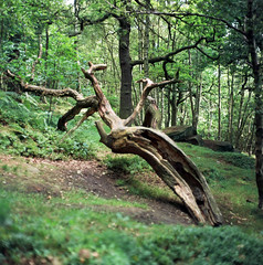 (Chris Hester) Tags: 73 5p trees forest wood green