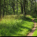20190726_18 Narrow trail, grass, & trees | Kinnekulleleden, Västergötland, Sweden
