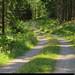 20190726_16 Small road through spruce forest | Kinnekulleleden, Västergötland, Sweden
