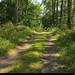 20190726_12 Small forest road | Kinnekulleleden, Västergötland, Sweden