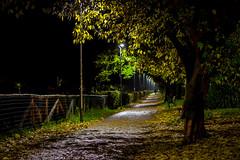 The park after the rain - Il parco dopo la pioggia 3 (massimo.forapani) Tags: parco park rain pioggia ombra shadow foglie notte
