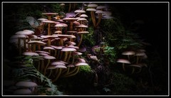 The Colony (Parchman Kid (Jerry)) Tags: the congregation mushrooms pilz wood woods forest light smell smells parchmankid sony a6500 jerry burchfield landscape ilce6500 ambiance ambience mood ambient ambiant moody atmosphere