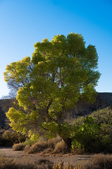 Luminate (jwreichle) Tags: sony alpha a6300 carlzeiss zeiss joshuatree california travel desert