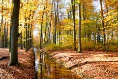Herfst op zijn best (frans63) Tags: trees autum bomen blaadjes herfst sun zon water wood bos reflections spiegeling