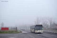 Mercedes-Benz Citaro Euro 3 - 4167 - R402 - 16.11.2019 (VictorSZi) Tags: romania mercedes mercedescitaro mercedescitaroeuro3 mercedesbenzcitaroeuro3 bus autobuz nordului autumn toamna november noiembrie transport stb publictransport
