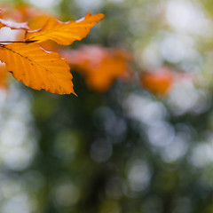 Autumn light-8122 (alan.dphotos) Tags: woodland tree trees golden leaf leaves green autumn wet floor branches twigs trunk branch landscape forest outdoor foliage plant serene