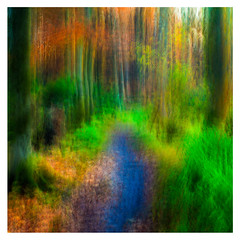 Lifes pathway (1 of 1) (ianmiddleton1) Tags: woodland trees autumn fall colours colors icm composite