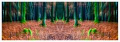 Thin Line (1 of 1) (ianmiddleton1) Tags: glasgow mirrorimage woodland icm composite autumn fall