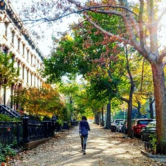 Walking on sunshine (spurekar) Tags: brooklyn parkslope parkslopehistoricdistrict fall autumn nyc new newyork trees sidewalk leaves color change walking woman girl alone morning sunrise sunlight brownstone nature city