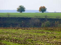 Bărăgan view (Dumby) Tags: landscape ilfov românia autumn fall nature outdoor colors