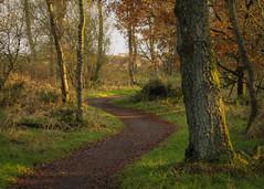 Woodland Evening (NanashiNoProfile) Tags: loch leven rspb heritage kinross scotland kinrossshire perthshire walk walking canon 700d autumn autumnal november