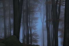 Bathed in Fog (marionrosengarten) Tags: wald128 forest fog moody morning trees nebel nebelwald autumn baum light nikon nature spooky odenwald