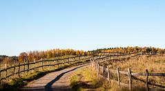 Country road in autumn (P. Burtu) Tags: sweden sverige landskap landscape träd tree landsbygd landet landsväg countryside fall höst sky himmel järva skog forest väg rural