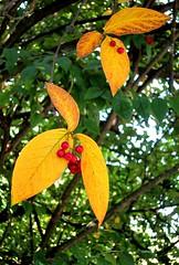 berries (Sonja Parfitt) Tags: test