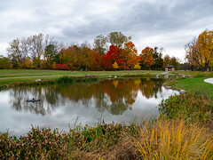 _1070976 (tristan.gellatly) Tags: pond cloudy park nature autumn fall colors