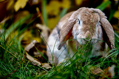 Photo (BadSoull) Tags: photo prague animal bunny 2019 pet cute outside sony mirrorless a6300