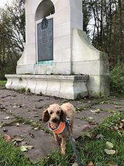 Medmenham walks with the dogs by the Thames, Buckinghamshire - November 2019 (Pub Car Park Ninja) Tags: