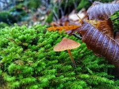 IMG_20191116_130244-01 (todorovbp) Tags: nature naturephoto smartphone huawei